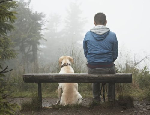 Practice Mindfulness with Animals